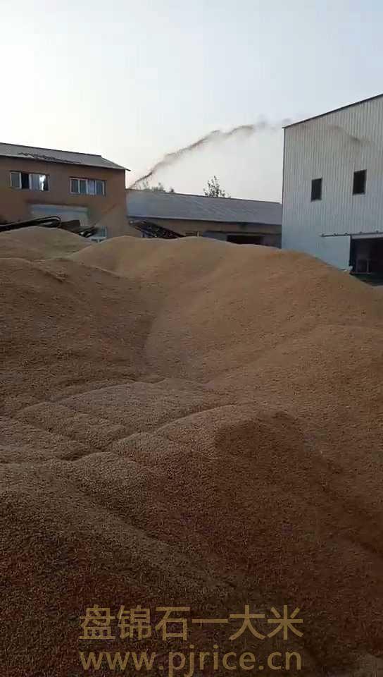东北大米生产厂家联系方式