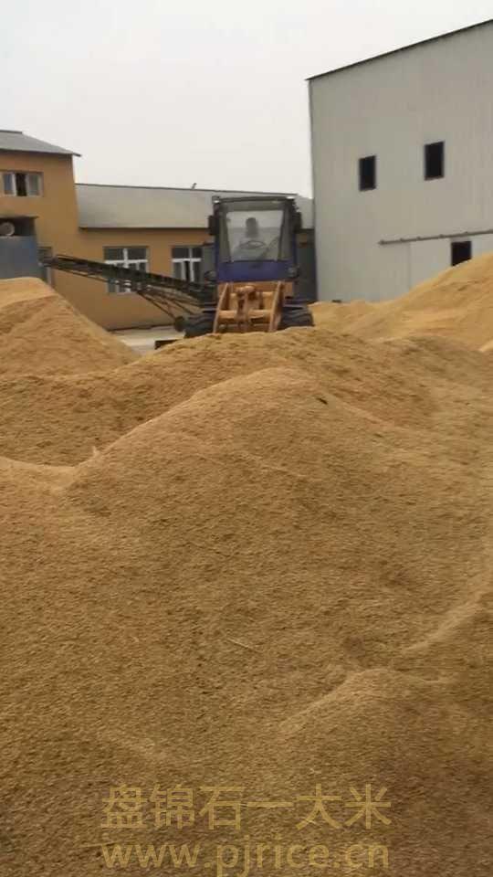 东北大米多少钱一吨?质优价廉的东北大米批发价格是多少?