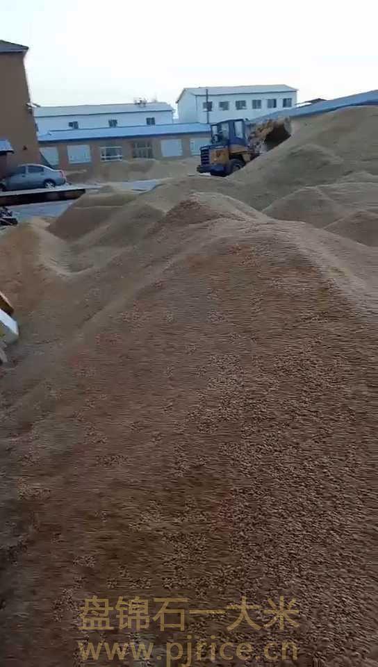 大米进货价格是多少钱