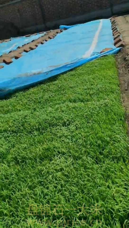 大米批发价格多少钱一吨?