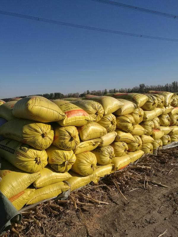 五常大米跟盘锦大米有什么区别?