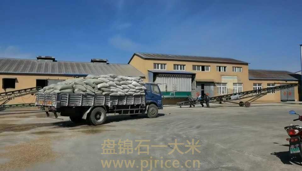 盘锦大米价格多少钱一斤