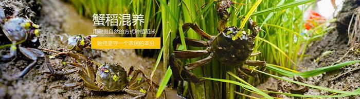 盘锦大米种植基地图片